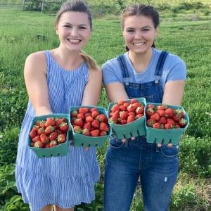 Bluegrass Berry Farm