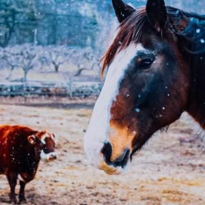Stowe Farm: Equestrian Camp