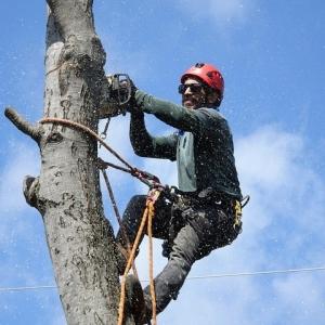 Aurora Tree Service