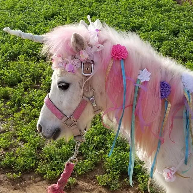 Charming Pony Parties