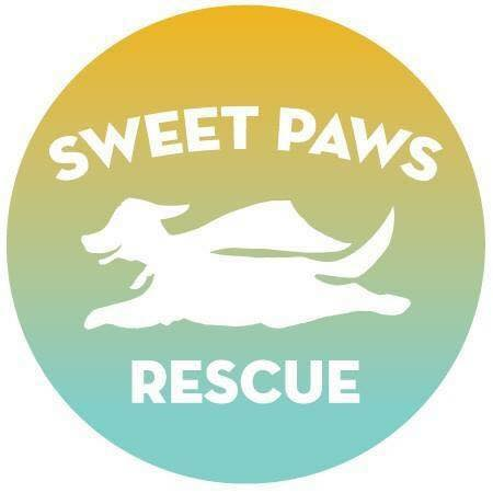 Rescue and rehome dogs and cats