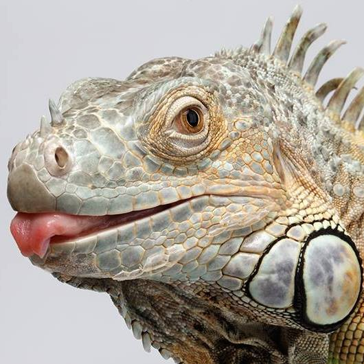 New England Reptile Shows