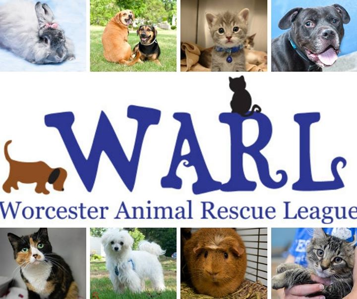 Worcester Animal Rescue League Hulafrog Worcester Ma