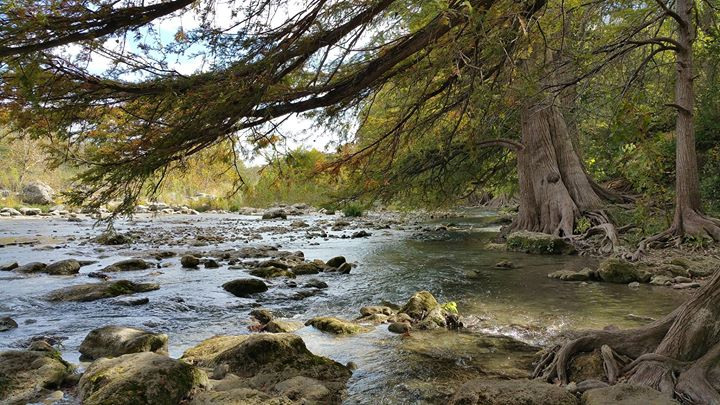 Guadalupe River State Park - Texas Parks & Wildlife: Nature Hike or Play in the River!