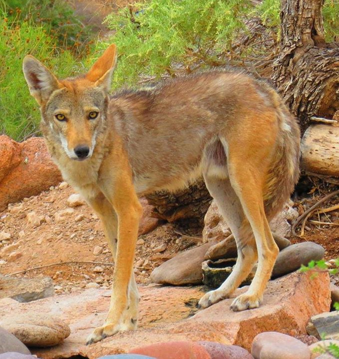 Franklin Mountains State Park - Texas Parks and Wildlife