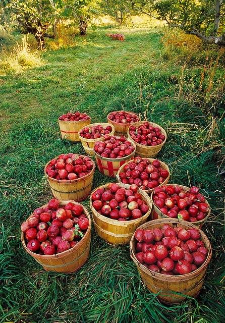 Auntie Evie's Orchard