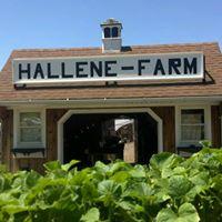 Hallene Farm