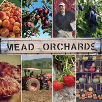Mead Orchards